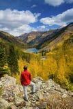 Álamos tremedores no outono Fotografia de Stock Royalty Free