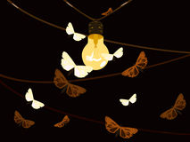 Lamp. Moth and lamp on dark background Royalty Free Stock Photos