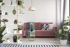 Lamp above table with flowers in front of red sofa in white living room interior with plants. Real photo. Concept stock photos
