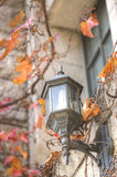 Lamp amidst autumn leaves Royalty Free Stock Photo