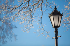 Lamp and branches Royalty Free Stock Photos