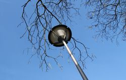 Lamp and branches Stock Photos
