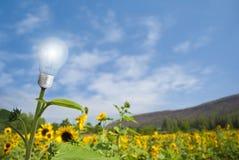 Lamp bulb sunflower on sunflower field. Eco concept : lamp bulb sunflower on sunflower field stock photo