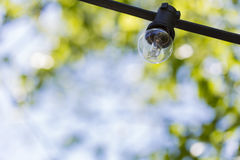 Lamp bulb on a sunny bay on blurred green leaves tree and blue sky Stock Images