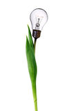 Lamp bulb tulip Royalty Free Stock Photos