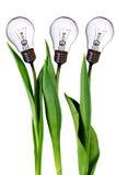 Lamp bulb tulips Royalty Free Stock Image