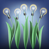 Lamp bulb tulips Royalty Free Stock Photo