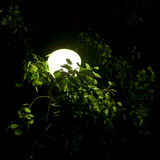 Lamp in foliage. The night lamp in park lights to people a way Royalty Free Stock Photos