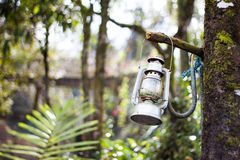Lamp in forest Royalty Free Stock Photography