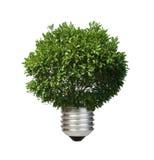 Lamp gemaakte ââof groene boom. De conceptie van de ecologie Stock Afbeeldingen