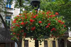 Lamp with hanging flower baskets Royalty Free Stock Photography