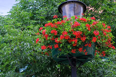 Lamp with hanging flower baskets Stock Photo