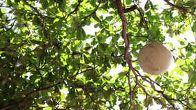 Lamp hanging on the tropical tree at the beach with green plants backgound. Tropical island Bali, Indonesia. Sanur beach. Lamp hanging on the tropical tree at stock footage
