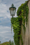 Lamp with ivy on the Prague wall Stock Image