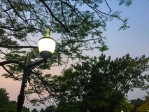 Lamp lichte boom Royalty-vrije Stock Foto's