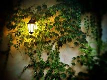 Lamp in night Stock Photo