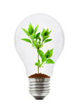 Lamp and plant Stock Photos
