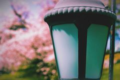 Lamp post. With cherry blossoms in background Royalty Free Stock Image