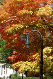 Lamp post in Fall colors Royalty Free Stock Images
