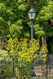 Lamp post with fence and yellow flowers Stock Photos