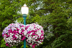 Lamp Post Flowers Stock Photography