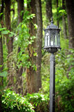 Lamp post in a forest Stock Photography