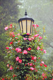 Lamp post and roses. Black lamp post with pink climbing roses Stock Photography