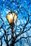 Lamp post and tree branches on snowy night stock photography