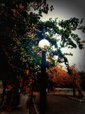 Lamp shade. A lamp shade makes a nature beautiful and poetic Royalty Free Stock Images