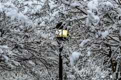 Lamp in snow Stock Image
