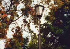 Lamp street tree autumn leaves sky outdoors Royalty Free Stock Photography