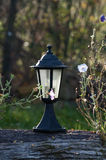 Lamp surrounded by flowers Royalty Free Stock Images