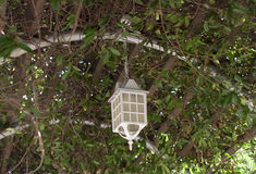 Lamp on the tree summer veranda overgrown with lanterns hanging from tree Royalty Free Stock Photo