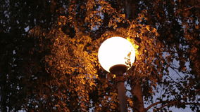 Lamp in trees in the park at night stock footage