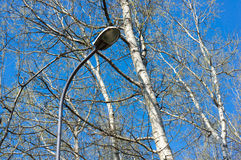 Lamp and trees Stock Image