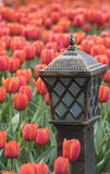 Lamp with tulips Royalty Free Stock Photos