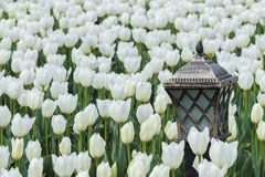 Lamp with tulips Royalty Free Stock Image