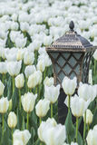 Lamp with tulips Stock Photo