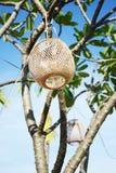 Lamp van bamboe Stock Afbeeldingen