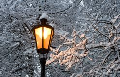 Lamp in the winter park Stock Photo