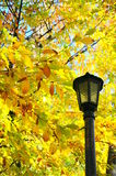 A lamp and yellow leaves. Yellow and dry leaves during autumn Stock Photography