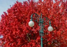 Lampa för gataljus på bakgrund av filialer av härliga ljusa röda kulöra sidor för höst av den underbara prakten för träd av natur Arkivbild