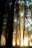 lampa forest5 royaltyfri fotografi