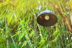 Lampa i bambuforestThailand arkivfoton