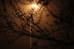 Lampa i mörkret Arkivfoto