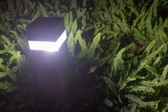 Lampa i ormbunketrädgård på nattetid Arkivbilder