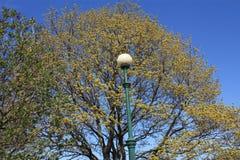 Lampa mot ett träd och en blå himmel royaltyfria bilder