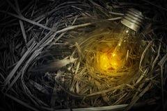 Lampa na gniazdowym jajku Zdjęcie Royalty Free