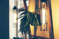 Lampa och inlagd växt i inre royaltyfria foton