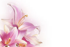 Lampa - rosa blommalilja Royaltyfri Foto
